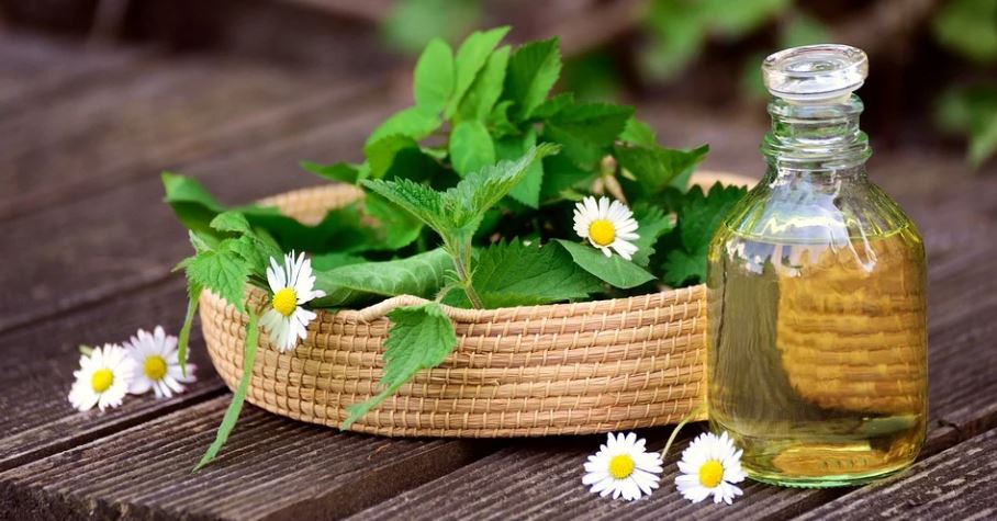 bylinná léčba