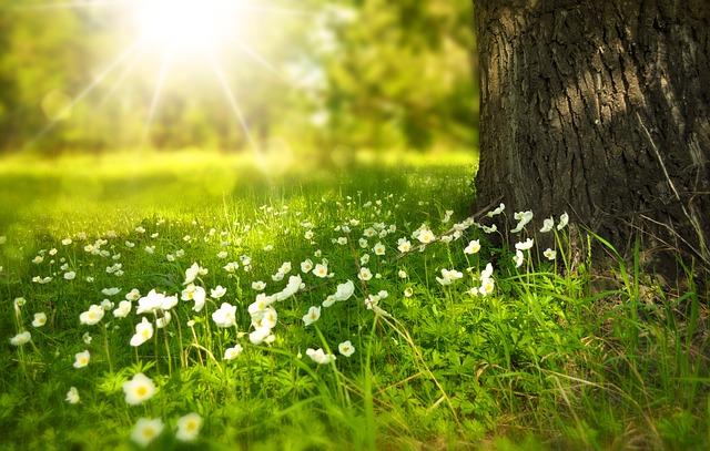 kytičky u stromu.jpg