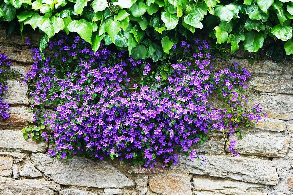 květiny na kamenné zdi